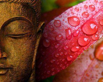 Будда и красный лепесток с росой